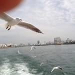 平和公園から宮島まで遊覧船をブラタツヤ