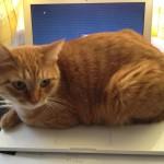 ネコがMacを占領、どいてくれー