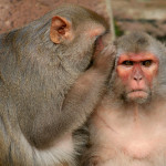 タイトルに「Monkey」がつく曲 ランキング  ~iTunesの曲名検索で遊ぼう