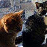 7年前の遠い東北の出来事だけど、2匹の猫がいるから忘れない。